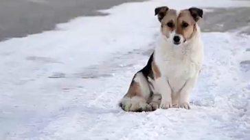 6 hónapon keresztül várt gazdájára egy hűséges kutya