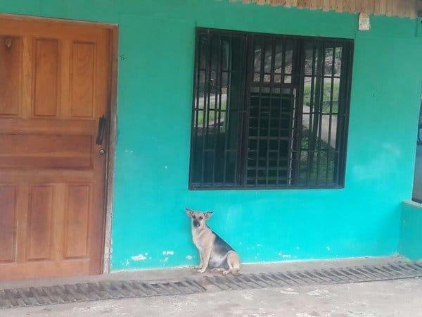 A ház lakói elköltöztek és ott hagyták a vemhes kutyájukat