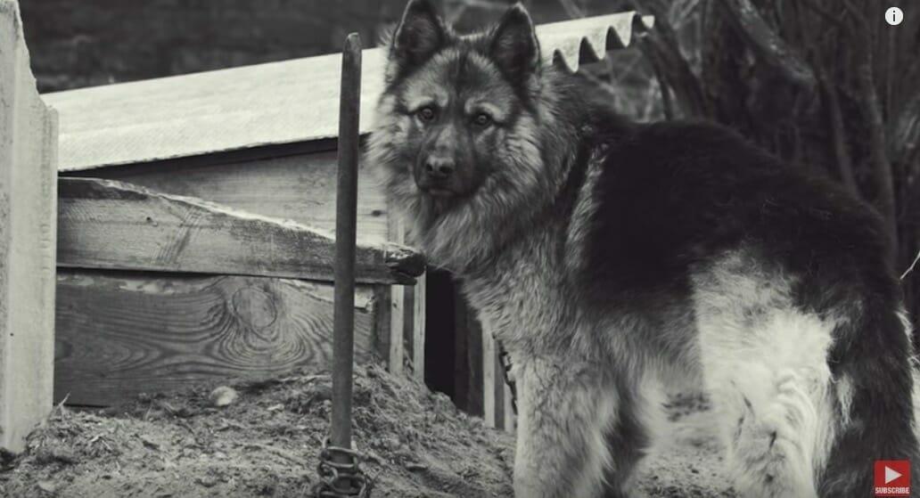 A kutyát 5 év után engedik el a láncról