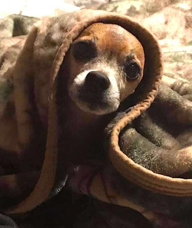 A menhelyi kutya minden éjszaka betakarja magát