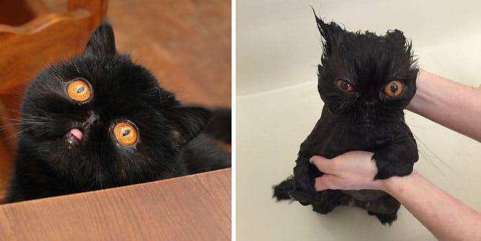 Macskák fürdés előtt és után