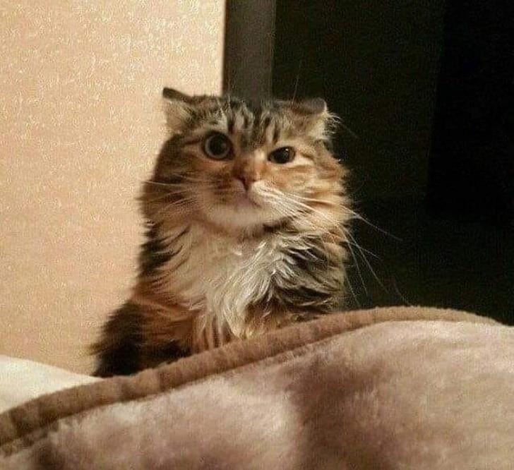 amit csak a macskagazdik tapasztalnak