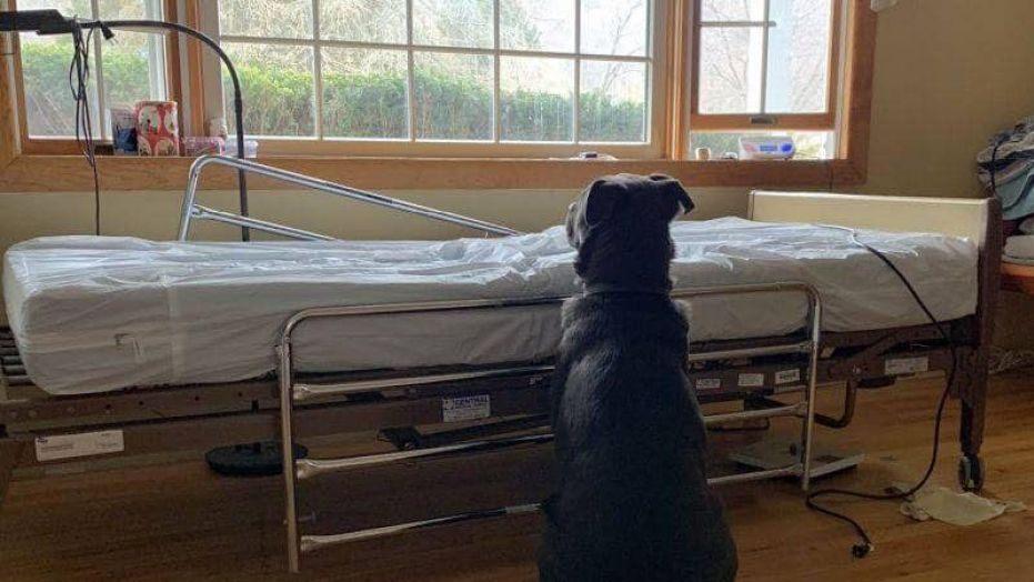 ezért ül a kutya az üres ágy mellett
