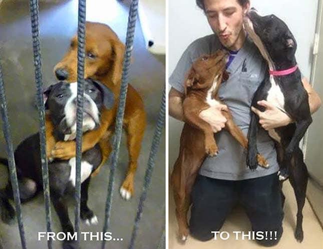 fénykép mentette meg a kutyák életét