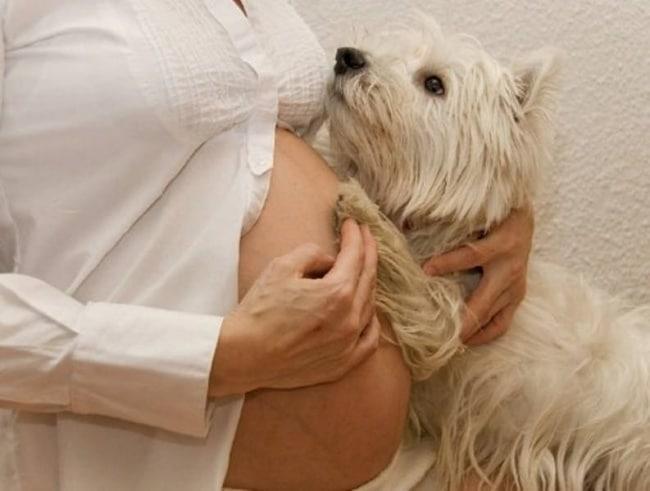 kutyák várják a kisbaba megszületését