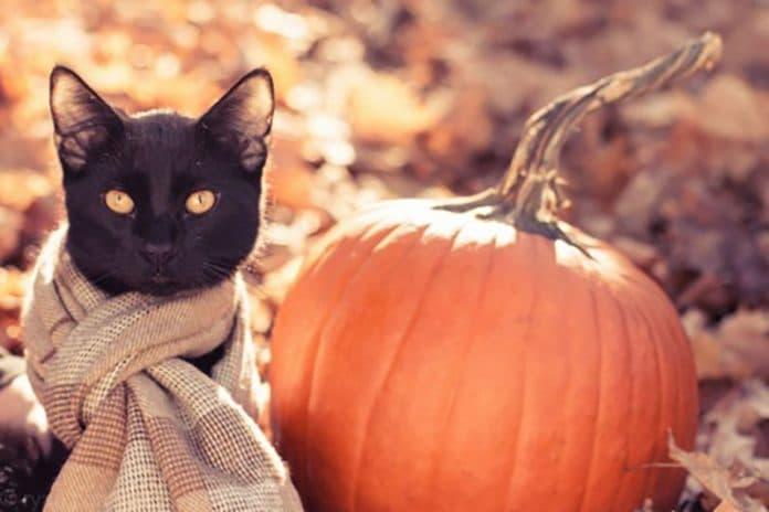 macskák akik szeretik az őszt