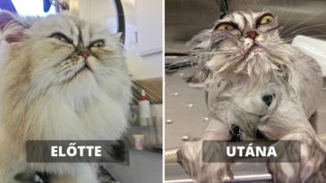 macskák fürdés előtt