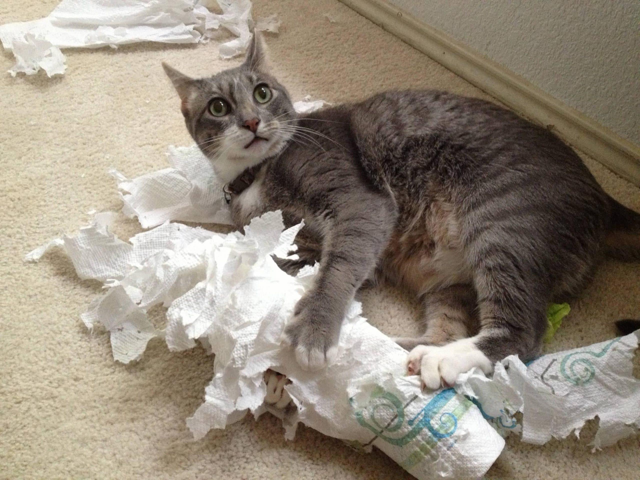 macskával az élet sose unalmas2