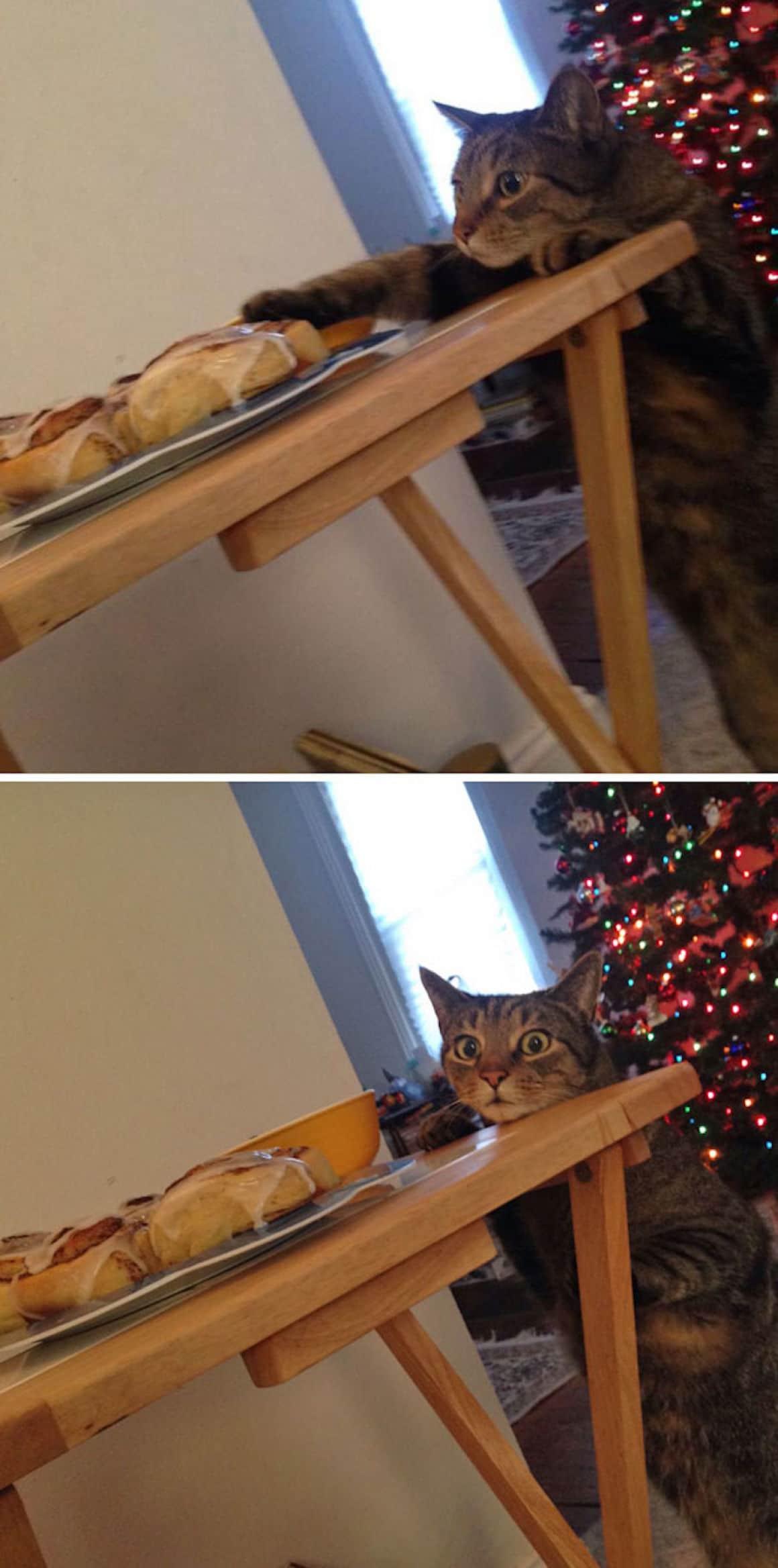 macskával az élet sose unalmas