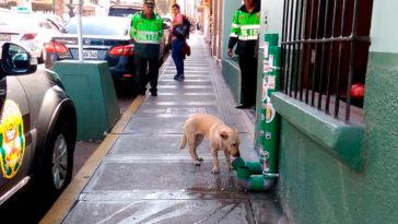 ételadagoló automata kutyák számára
