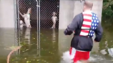 újságírók mentették meg a kutyákat