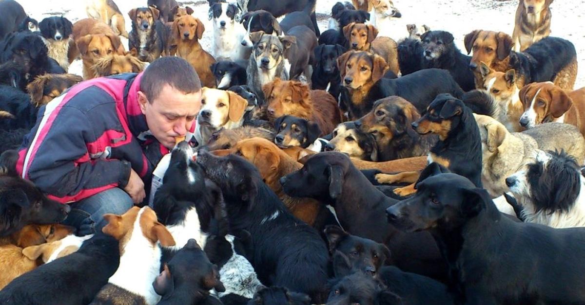 450 kutyának ad otthon a férfi