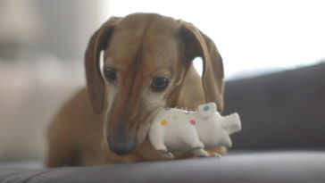 5 év után kapta vissza a játékát a kutya