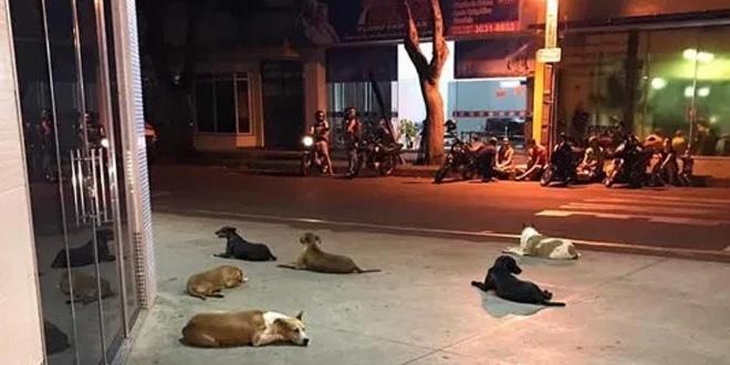 6 kutya rohant a mentőautó után