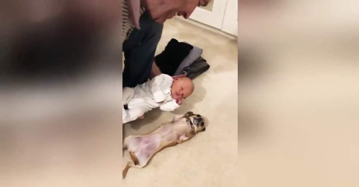 9 hónapot várt a kiskutya a csecsemő érkezésére