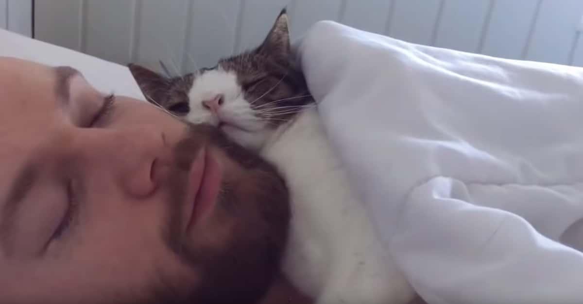 A férfi befogadta a legkevésbé kívánt macskát a menhelyről