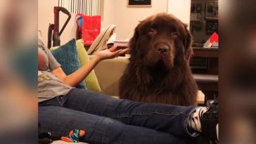 A gazdi elnézést kér kutyájától