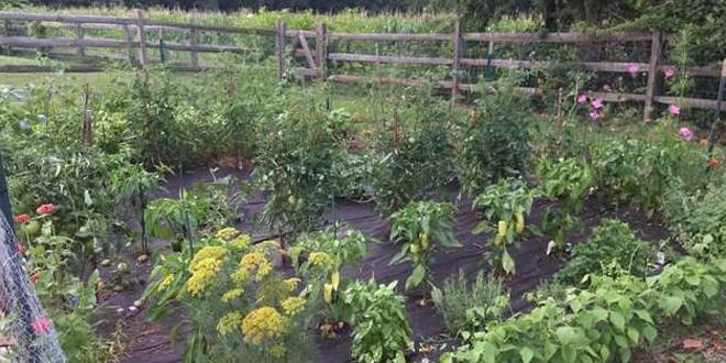 A kertész beleszeretett a titokzatos tolvajba
