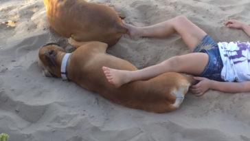 A kislány piszkálni kezdi a strandon fekvő kutyát