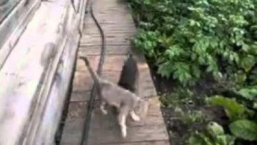 A kutyát kéri meg gazdája, hogy hozza haza a macskát