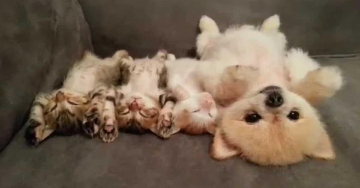 A kutya és a három cica legjobb barátok lettek