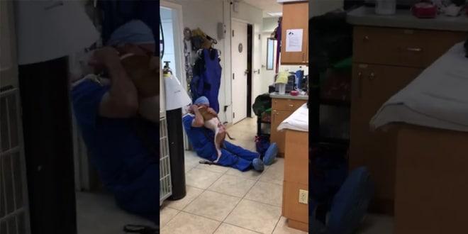 A kutya ismét találkozik az állatorvossal