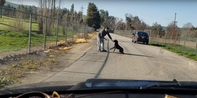 A semmi közepén hagyta a kutyáját egy férfi