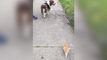 Egy árva cica minden reggel követte amikor a kutyáját sétáltatta