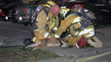 Ezért érdemelnek a tűzoltók külön helyet a Mennyországban