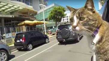 Ez a macska bekerült a Guinness Rekordok Könyvébe