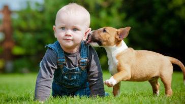 Ezt mondta a kutyapusziról egy magyar állatorvos