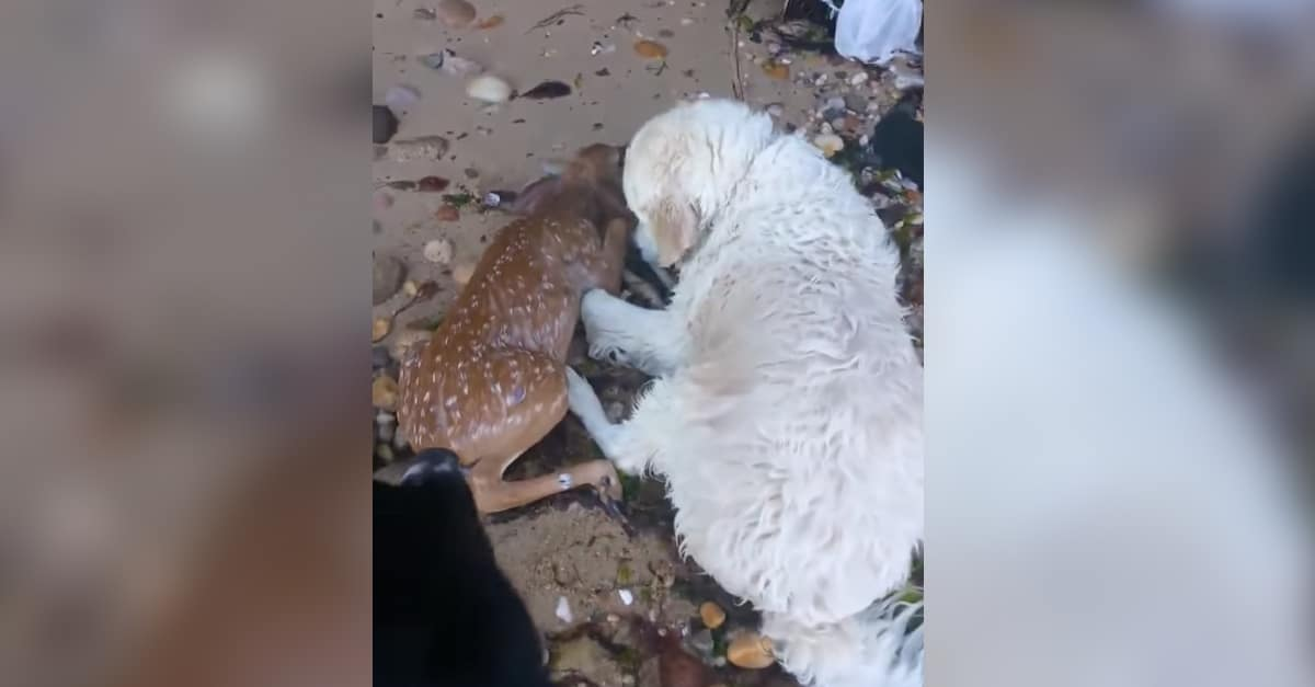Fuldokló őzgida életét mentette meg a kutya