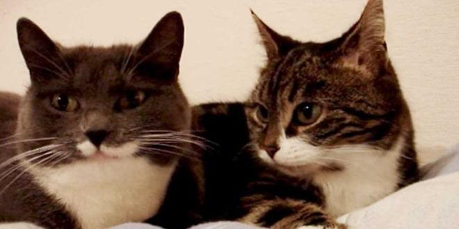 Két macska beszélget az ágyban