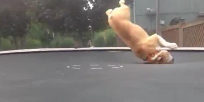 Kutya így még nem élvezte a trambulint