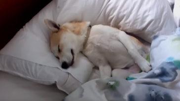Profin játssza a halottat a kutya