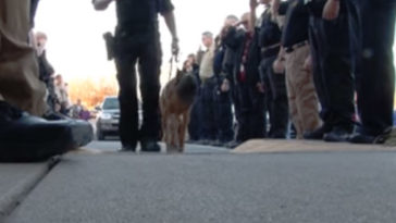 Rendőrségi díszfal előtt ment a rendelőbe Pajti