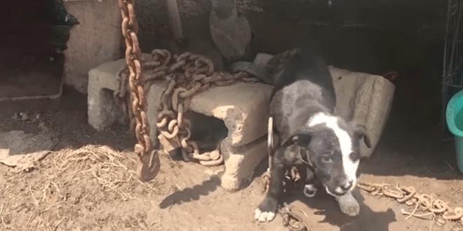 Sírva könyörgött a 10 hetes kiskutya