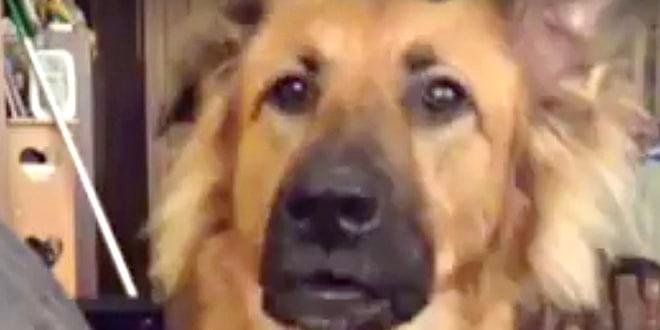 Teljesen felháborodik a kutya