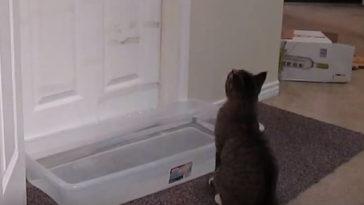 Vizet tett ajtó elé, hogy macskája ne tudjon bemenni