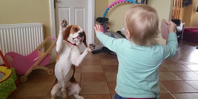 a kutya nem csak állat, hanem igazi családtag