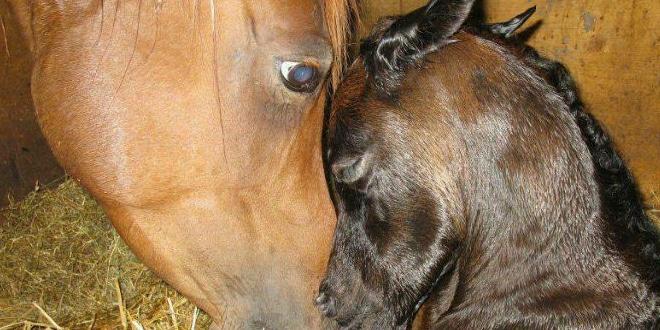 gyönyörű lovak jöttek a világra
