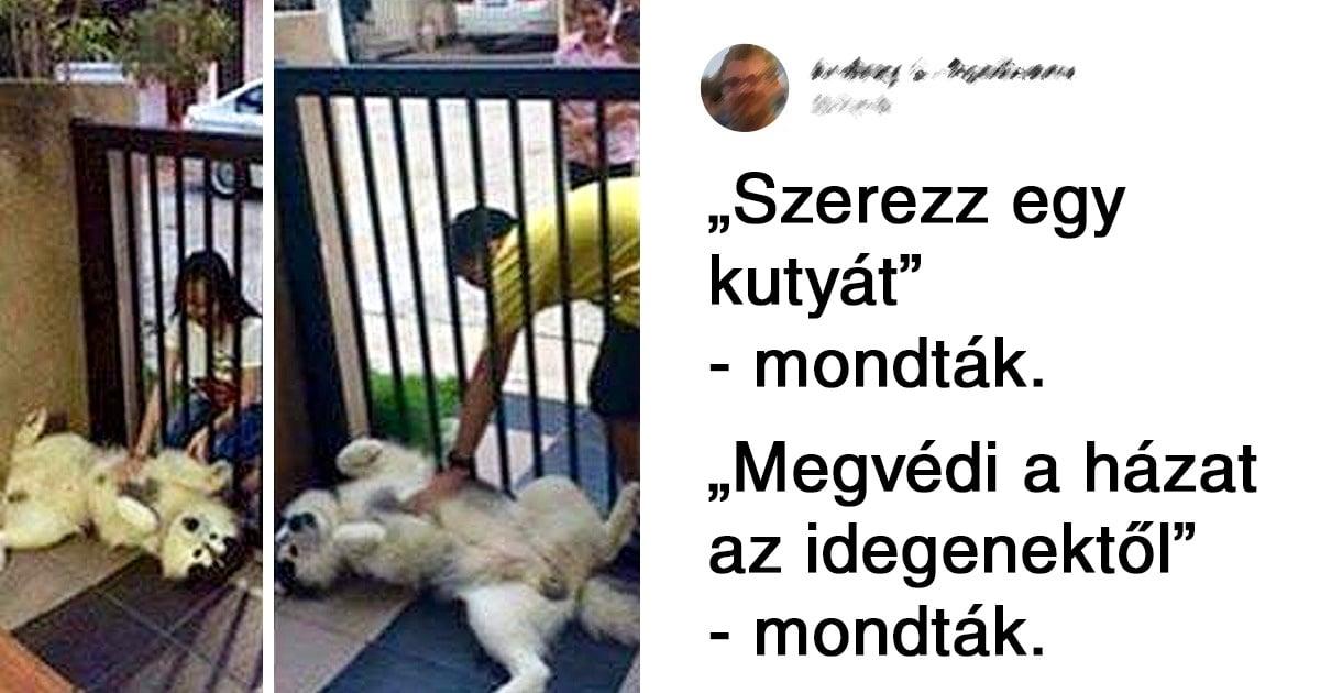 kutyák megpróbáltak jól viselkedni
