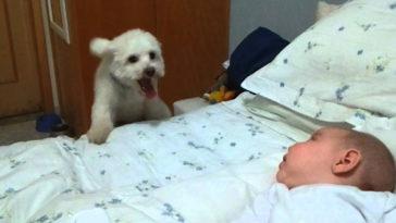 kutya kíváncsi a kisbabára