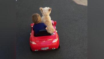 kutya vezeti a kisautót