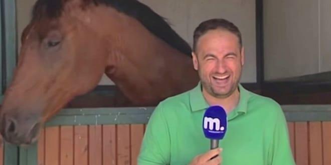 ló megnevetteti a riportert