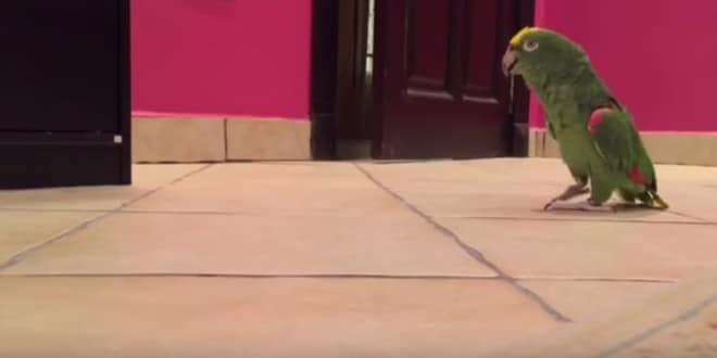 vicces papagáj