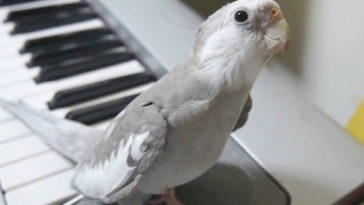 Íme a világ legédesebb papagája