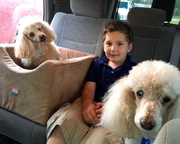 Öreg kutyákat fogad örökbe a 8 éves kisfiú