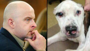 10 év börtön és kitoloncolás vár a kutyakínzóra