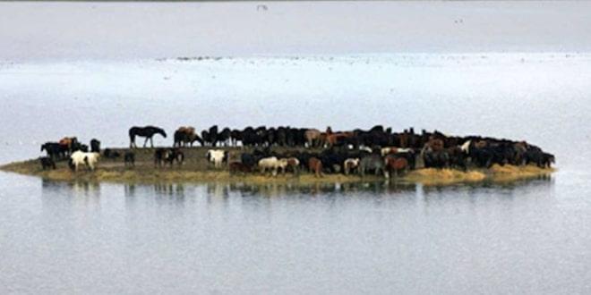 100 ló várja halálát a szigeten